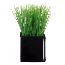 Travina velká v černém květináči ASA Selection