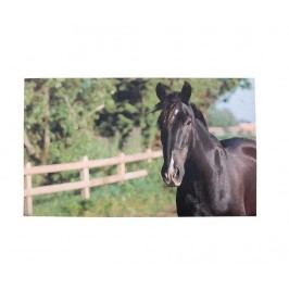 Vchodová rohožka Horse 46x76 cm