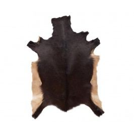 Koberec Vima 80x115 cm Kusové koberce