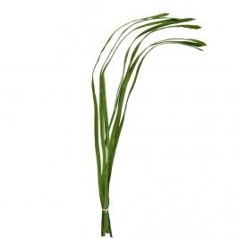 FLORISTA Svazek trávy
