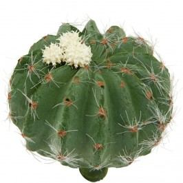 FLORISTA Kaktus