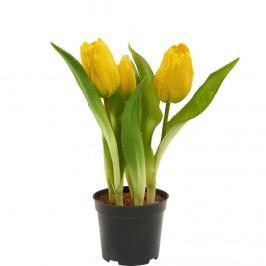 FLORISTA Tulipány v květináči - žlutá