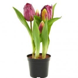 FLORISTA Tulipány v květináči - růžová