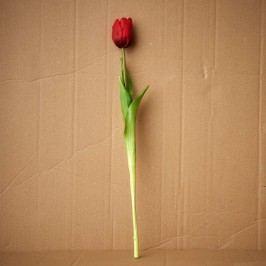 FLORISTA Tulipán - červená