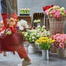 FLORISTA Tulipán - sv. růžová