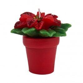 MERRY AND BRIGHT Čajové svíčky vánoční hvězda set 2 ks