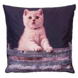 Jahu Povlak na polštářek Koťě v košíku, 40 x 40 cm