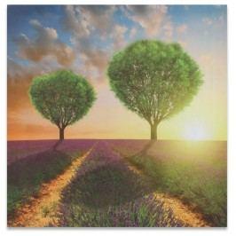 Dakls Obraz na plátně Sunset