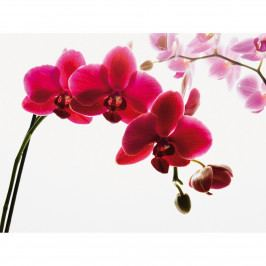 Up and Down Fototapeta Orchidej, 232 x 315 cm