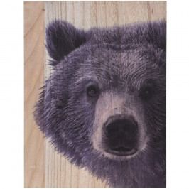 Obraz na dřevě Grizzly bear, 28 x 38 cm