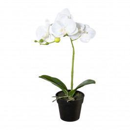Umělá Orchidej v květináči bílá, 37 cm