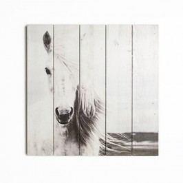 Dřevěný obraz Graham & Brown Horse,50x50cm