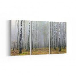 3-dílný obraz Birch, 30 x 60 cm